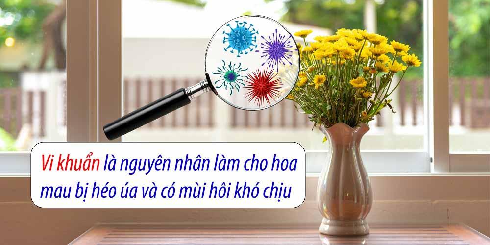 hoa tươi được bảo quản