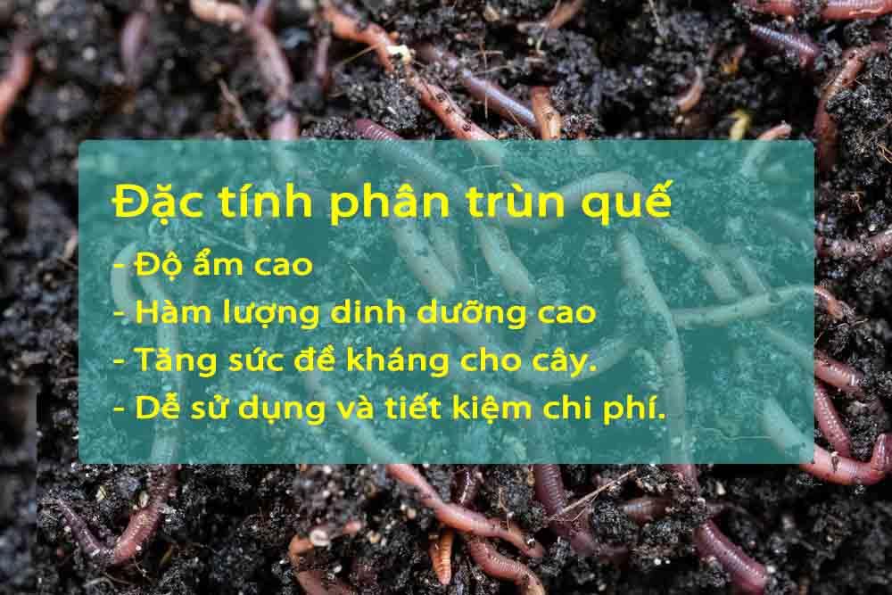 đặc tính của phân trùn quế