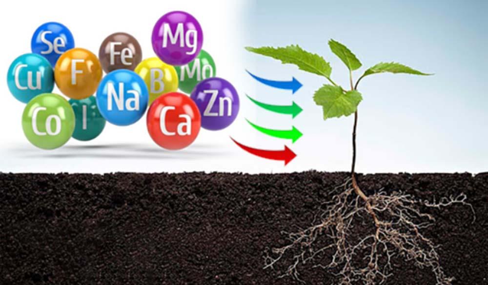 Các chất trong phân trung lượng đối với cây trồng
