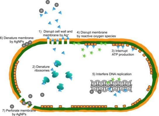 Hoạt động kháng khuẩn của nano bạc