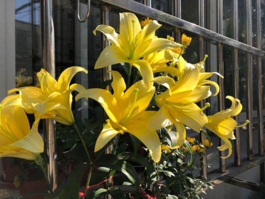 Lựa chọn ánh sáng thích hợp cho hoa