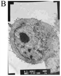Nano bạc diệt khuẩn chuyên dụng cho chăn nuôi
