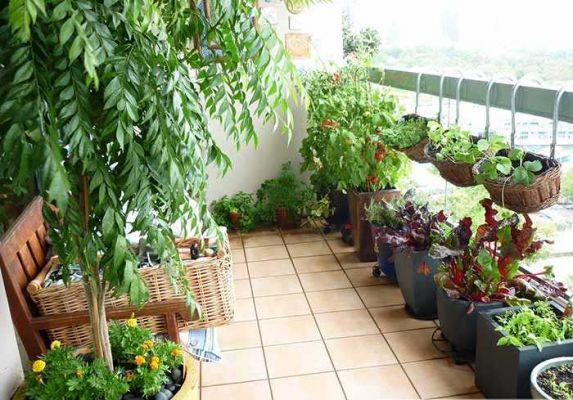 Vệ sinh vườn, khu vực trồng thông thoáng, tránh hiện tượng ẩm ướt, thiếu nắng