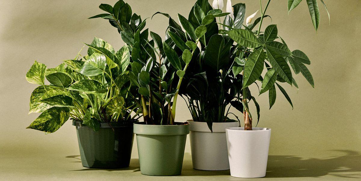 Các loại cây trồng trong nhà