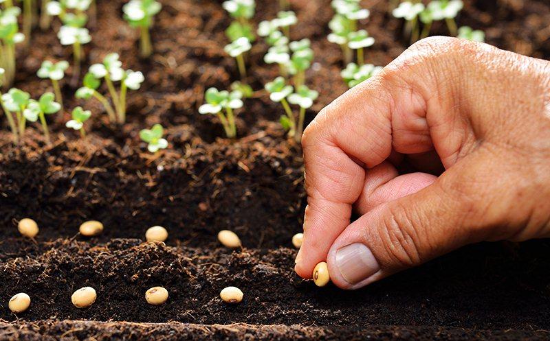 Chọn loại hạt giống phù hợp để trồng trong vườn của bạn