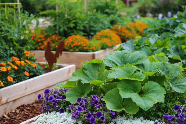 Làm vườn rau tại nhà dễ trồng